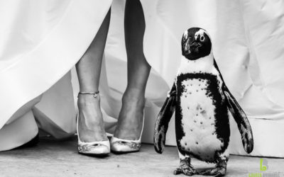 Turtle Back Zoo Wedding – Emily & Paul